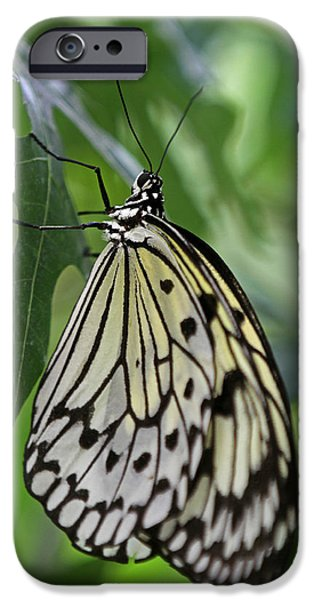 Recently Sold -  - Creek iPhone Cases - Tree Nymph iPhone Case by Juergen Roth
