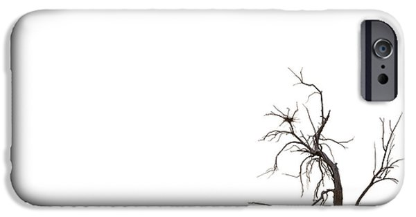 Dry Lake iPhone Cases - Tree iPhone Case by Peter Tellone
