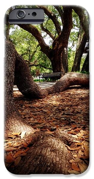 Tree Roots iPhone Cases - Tree Root iPhone Case by Greg Mimbs