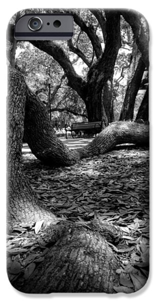 Tree Roots iPhone Cases - Tree Root in Black and White iPhone Case by Greg Mimbs