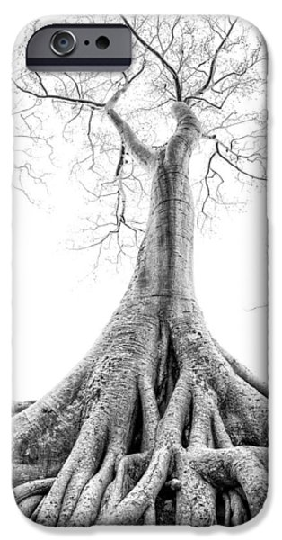 Tree Roots iPhone Cases - Tree Roots Cambodia Angkor Wat iPhone Case by Cory Dewald