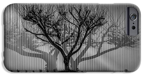Graphic Design iPhone Cases - Tree Shadow iPhone Case by David Vale