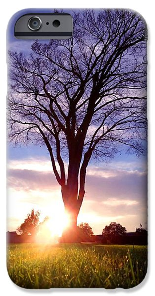 Charlotte Mixed Media iPhone Cases - Tree Sun Lit iPhone Case by Morgan Carter
