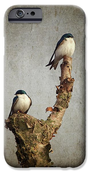 Swallow iPhone Cases - Tree Swallows iPhone Case by Al  Mueller