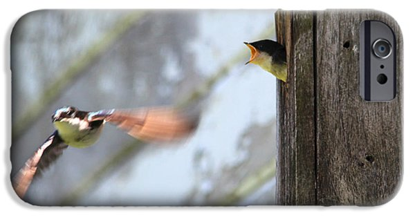 Barn Swallow iPhone Cases - Tree Swallows at Nisqually National Wildlife Refuge iPhone Case by Linnea Wilhelm