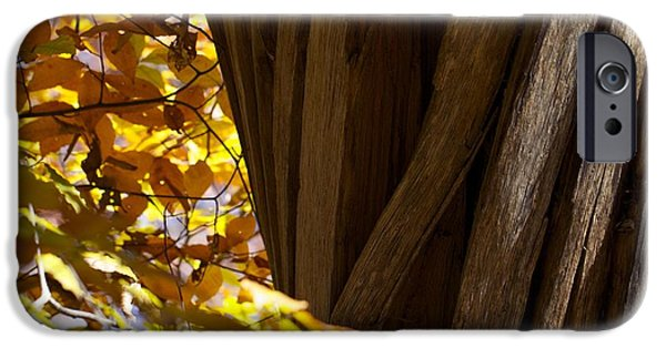 Autumn iPhone Cases - Tree Trunk iPhone Case by P Jeff Smith
