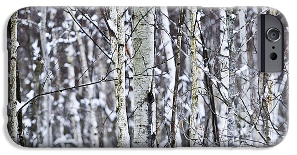 Winter Trees Photographs iPhone Cases - Tree trunks covered with snow in winter iPhone Case by Elena Elisseeva