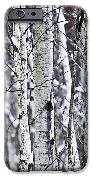 Tree trunks covered with snow in winter iPhone Case by Elena Elisseeva