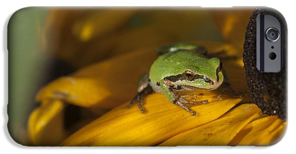 Floral Photographs iPhone Cases - Treefrog on Flower iPhone Case by Robert Potts