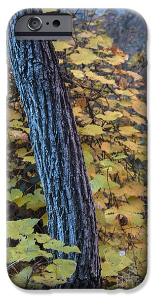 West Fork iPhone Cases - Trees and Leaves iPhone Case by Ruth Jolly