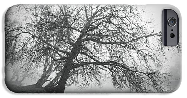 Monotone iPhone Cases - Trees bend to caress me iPhone Case by Linda Lees