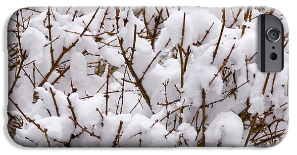 Snowy Weather iPhone Cases - Trees in Snow iPhone Case by Unknown