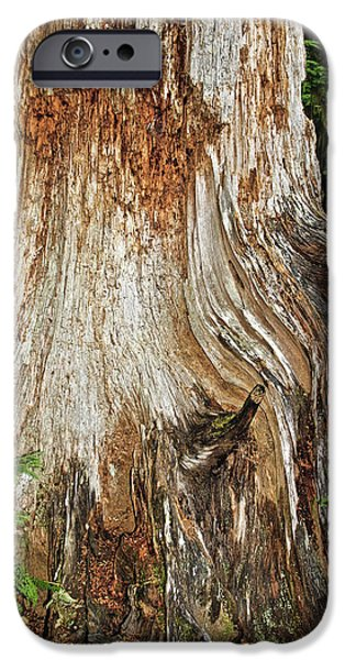 Tree Roots iPhone Cases - Trees on the Trails - Olympic National Park WA iPhone Case by Christine Till