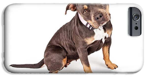 Mutt iPhone Cases - Tri Color Pit Bull Dog Tilting Head iPhone Case by Susan  Schmitz