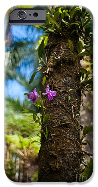 Orchids Photographs iPhone Cases - Tropical Beauty iPhone Case by Mike Reid