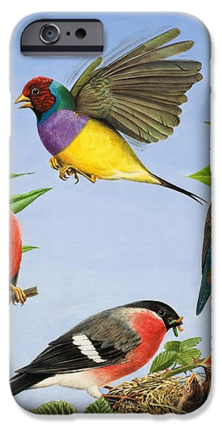 Hovering iPhone Cases - Tropical Birds iPhone Case by RB Davis