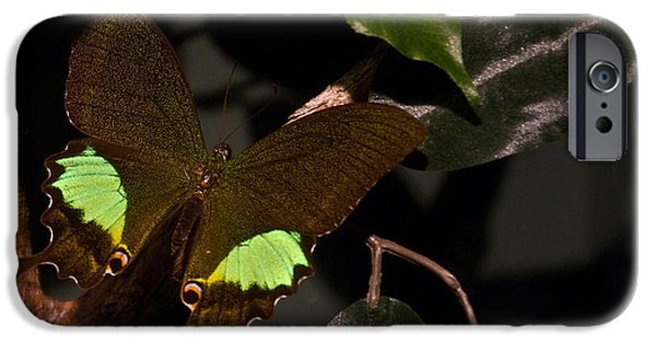 Buterfly iPhone Cases - Tropical Buterfly iPhone Case by Douglas Barnett