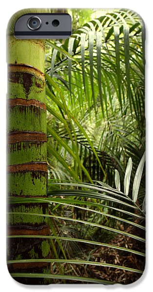 Tropical forest jungle iPhone Case by Les Cunliffe