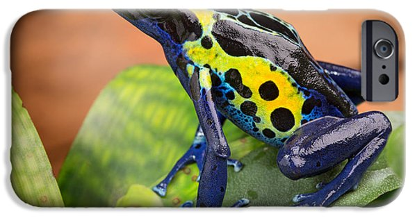 Frogs Photographs iPhone Cases - Tropical Poison Dart Frog iPhone Case by Dirk Ercken