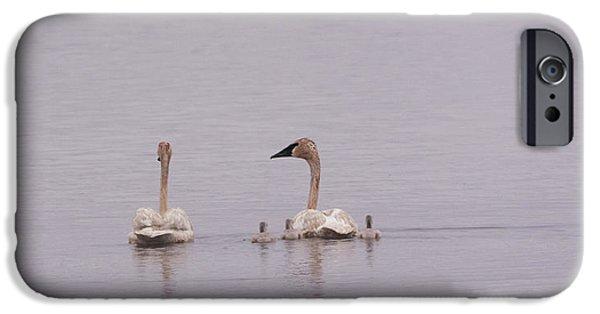 Swans... iPhone Cases - Trumpeters iPhone Case by Linda Kerkau