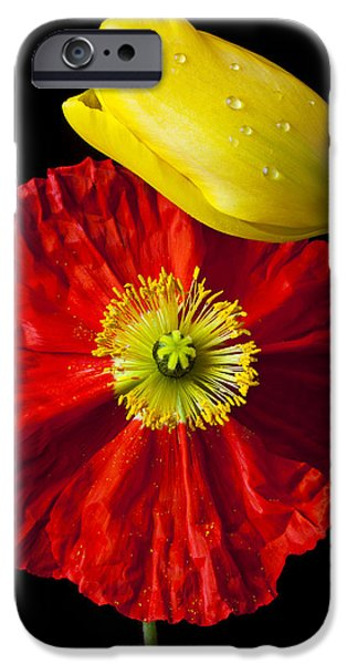 Wet Petals iPhone Cases - Tulip and Iceland Poppy iPhone Case by Garry Gay