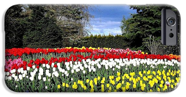 Mount Rose iPhone Cases - Tulip Country iPhone Case by Will Borden