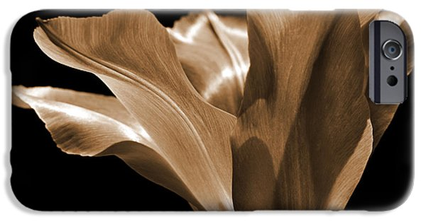 Sepia Flowers iPhone Cases - Tulip Flower Sepia iPhone Case by Jennie Marie Schell