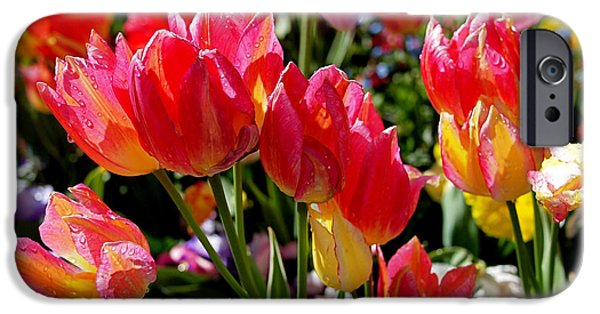Pink Photographs iPhone Cases - Tulip Garden iPhone Case by Rona Black