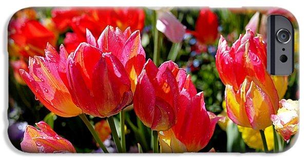 Tulips iPhone Cases - Tulip Garden iPhone Case by Rona Black