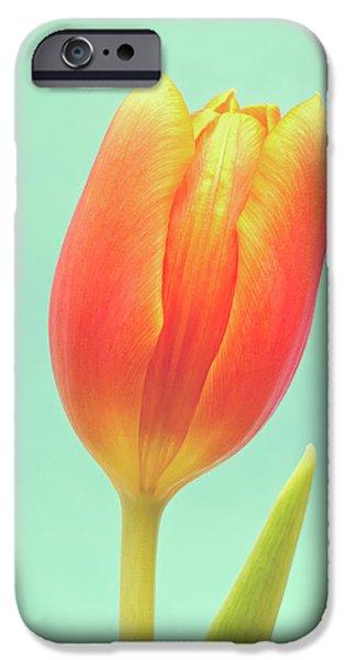 Close Up Floral iPhone Cases - Tulip iPhone Case by Wim Lanclus