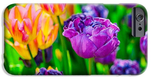 Flora iPhone Cases - Tulips Enchanting 27 iPhone Case by Alexander Senin