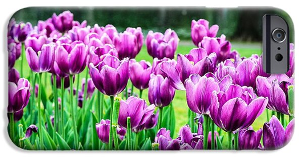 Boston Ma iPhone Cases - Tulips in the Public Garden Boston iPhone Case by Mike Ste Marie