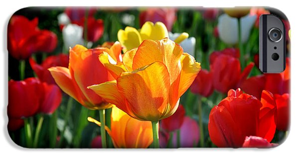 Arkansas iPhone Cases - Tulips In The Spring iPhone Case by Nava  Thompson