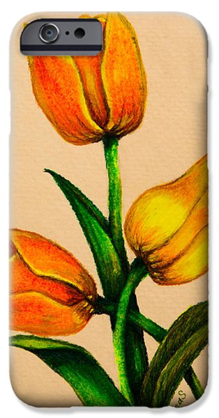 Flora Drawings iPhone Cases - Tulips iPhone Case by Zina Stromberg