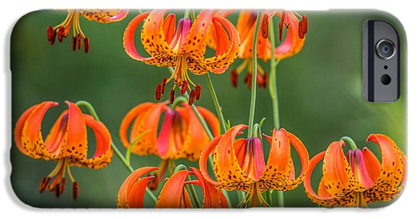 Flora iPhone Cases - Turks Cap Lily iPhone Case by Paul Freidlund