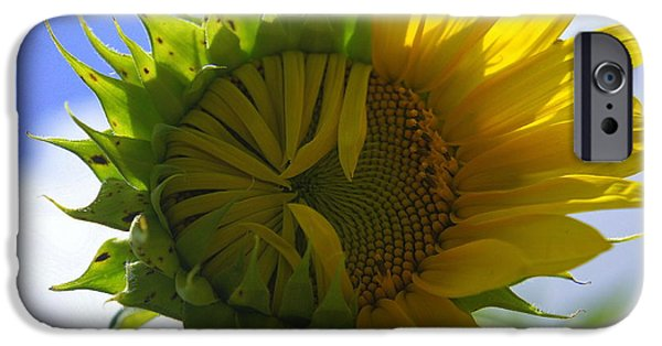 Crops iPhone Cases - Turning Point iPhone Case by Laurie Perry