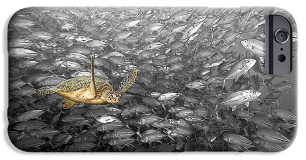 Animal Wisdom iPhone Cases - Turtle and Fish School iPhone Case by Dave Fleetham - Printscapes