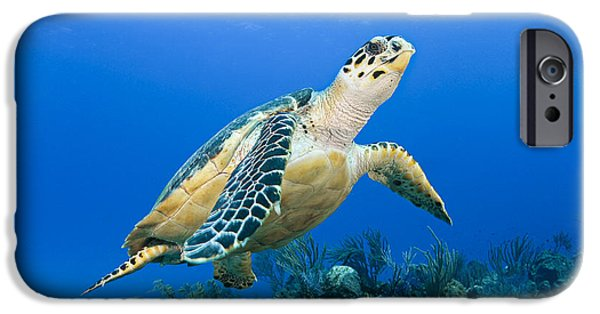 Animal Wisdom iPhone Cases - Turtle swimming iPhone Case by Dave Fleetham - Printscapes