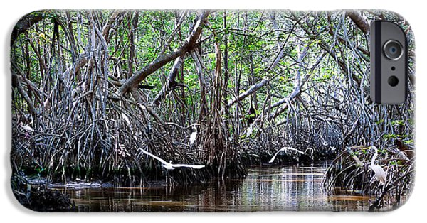 Mangrove Forest iPhone Cases - Twelve Egrets And An Ibis iPhone Case by Renee Sullivan