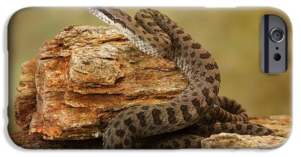 Serpent Photographs iPhone Cases - Twin-Spotted Rattlesnake on Desert Rocks iPhone Case by Susan  Schmitz
