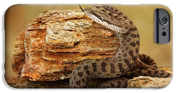 Serpent Photographs iPhone Cases - Twin-Spotted Rattlesnake With Tongue Out iPhone Case by Susan  Schmitz