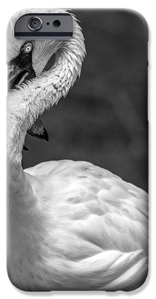 Fauna iPhone Cases - Twisted Albino Flamingo D6981 iPhone Case by Wes and Dotty Weber