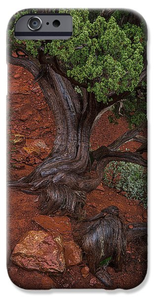 Sedona Pyrography iPhone Cases - Twisted Tree Trunk iPhone Case by Rick Strobaugh