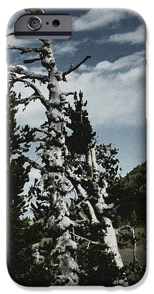 Interior Scene iPhone Cases - Twisted Whitebark Pine Tree - Crater Lake - Oregon iPhone Case by Christine Till