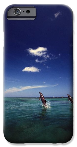 Two Bottlenose Dolphins Dancing Across iPhone Case by Natural Selection Craig Tuttle