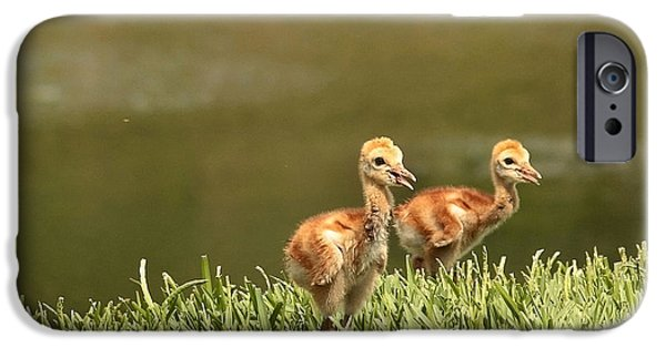 Baby Bird iPhone Cases - Two Chicks iPhone Case by Carol Groenen
