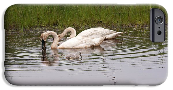 Swans... iPhone Cases - Two Cygnets and Parents iPhone Case by Linda Kerkau