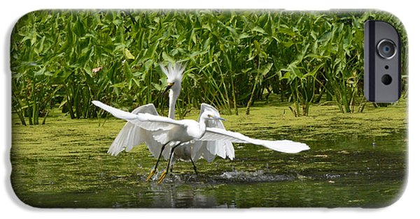 Snowy Day iPhone Cases - Two Egrets in territorial squabble iPhone Case by Merrimon Crawford