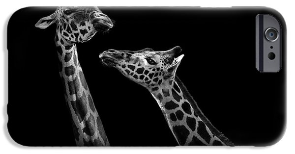 Animals Photographs iPhone Cases - Two giraffes in black and white iPhone Case by Lukas Holas