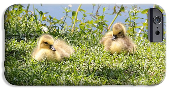 Baby Bird iPhone Cases - Two Goslings iPhone Case by Carol Groenen